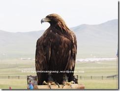 eagle.2